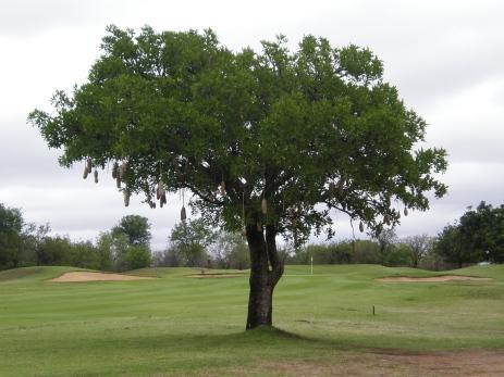 Hans Merensky Estate - Golf Course