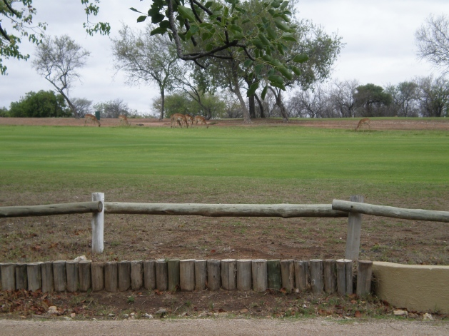 Wildlife on a golf course in Hans Merensky, Limpopo