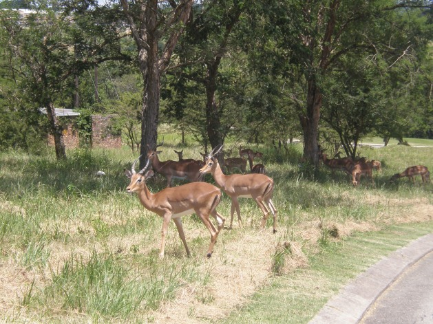 Kruger Park Lodge's wildlife