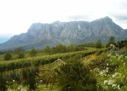 Wine Farm (Delaire)