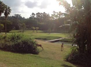 San Lameer Resort (4)