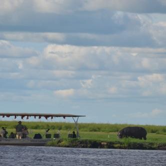 chobe-river-04-hippo-15