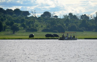 chobe-river-04-hippo-20