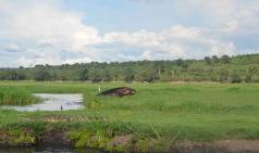 chobe-river-04-hippo-7