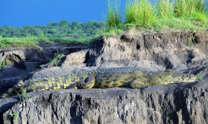 chobe-river-08-croc-3