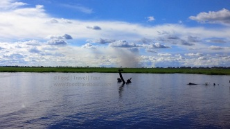 chobe-river-bird-4