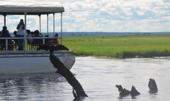 chobe-river-bird-5