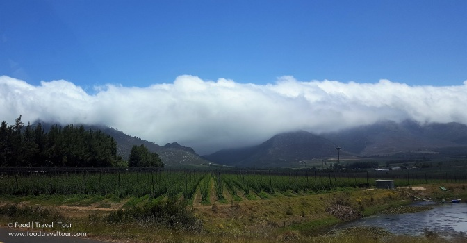garden-route-2016-driving-thru-outeniqua-pass-17