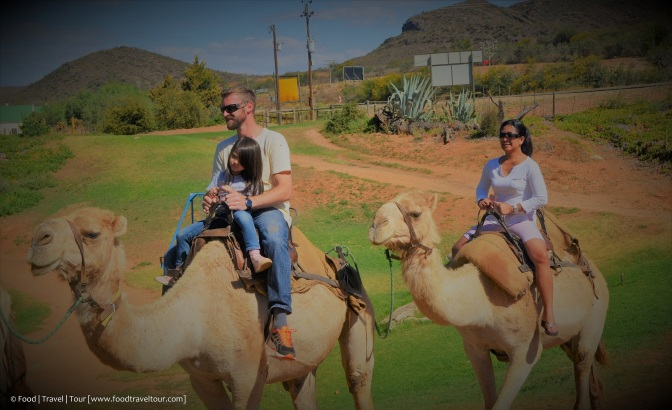 Garden Route 20161224 - Camel Ride 01