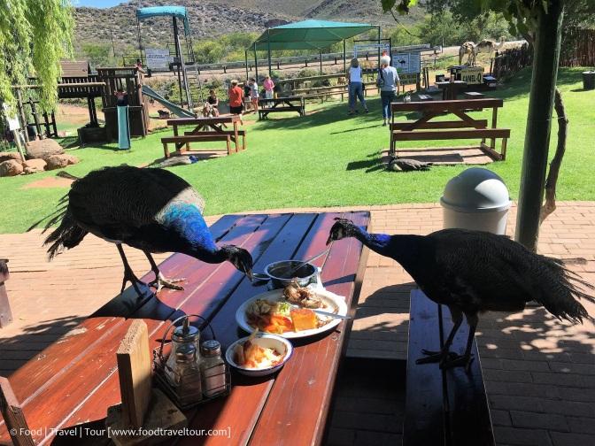 Garden Route Camel Farm 20161224 (14)