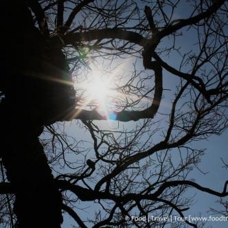 Travel Africa (SA) - Dullstroom 05 Sun (2)