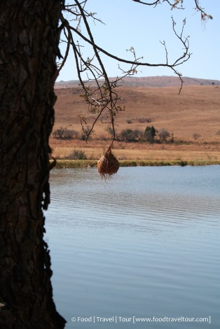 Travel Africa (SA) - Dullstroom 06 Other (5)