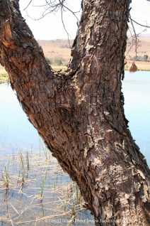 Travel Africa (SA) - Dullstroom 06 Other (6)