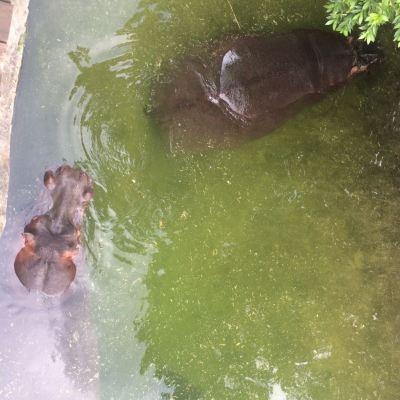 Emerald Resort 201712 Wildlife (6)